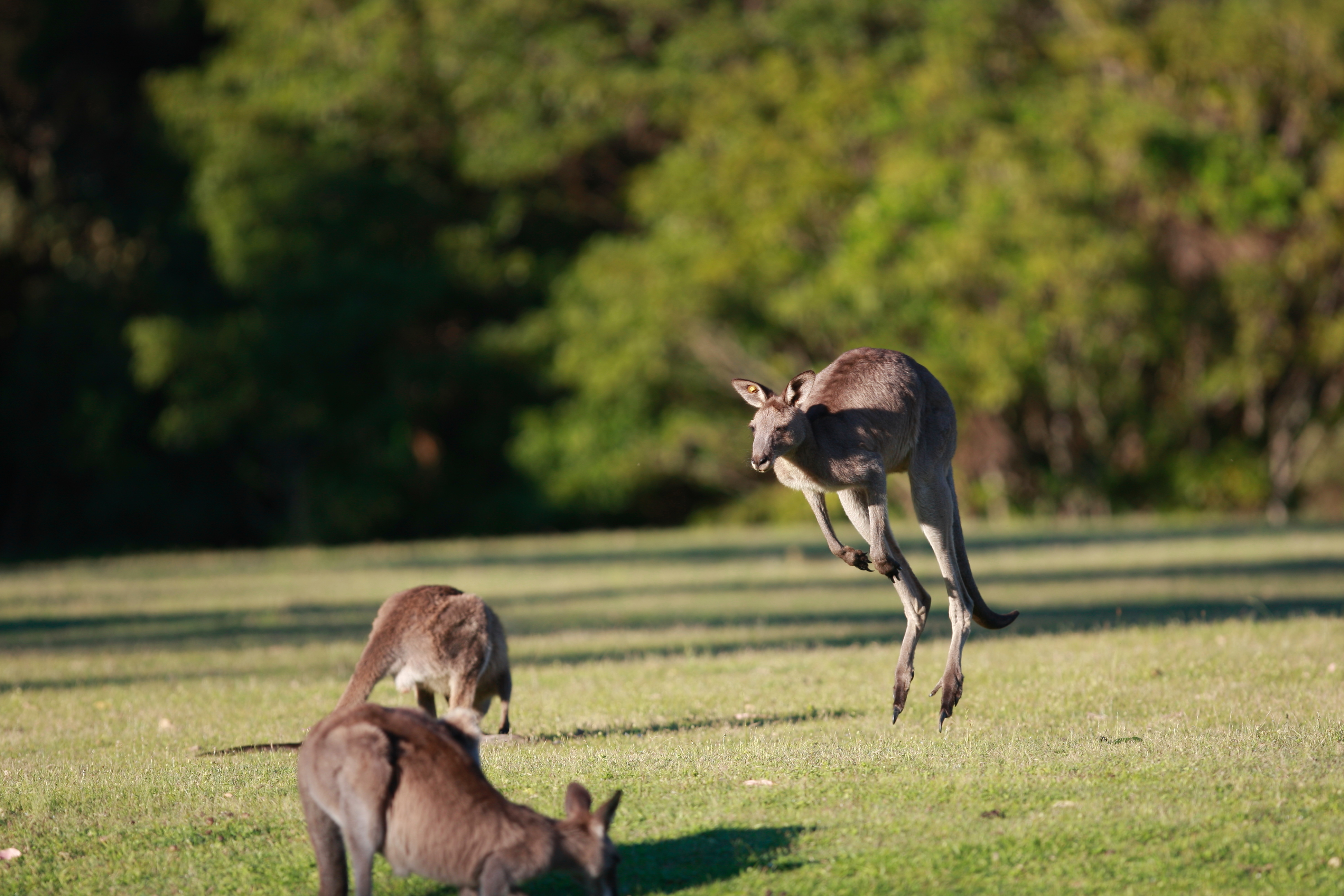 Australia_Wildlife_51